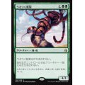 [EX+]うろつく蛇豹/Prowling Serpopard 《英語》【AKH】