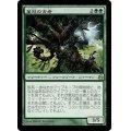 [EX+]葉冠の古老/Leaf-Crowned Elder《日本語》【MOR】