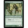 [EX]遺産のドルイド/Heritage Druid《日本語》【MOR】