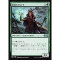 献身のドルイド/Devoted Druid《日本語》【UMA】