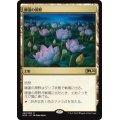 睡蓮の原野/Lotus Field《日本語》【M20】