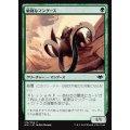 敏捷なマングース/Nimble Mongoose《日本語》【MH1】
