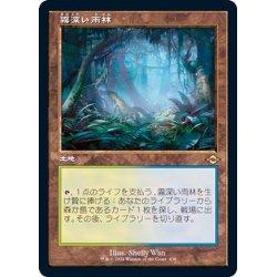 画像1: (FOIL)(旧枠仕様)霧深い雨林/Misty Rainforest《日本語》【MH2】